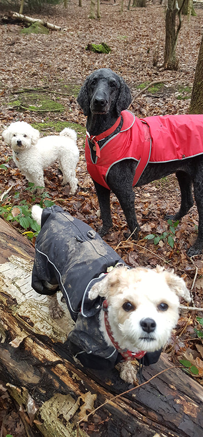 Dogs standing in a wood